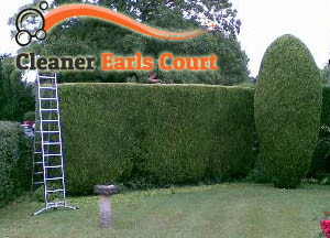 Hedge Maintenance Earls Court